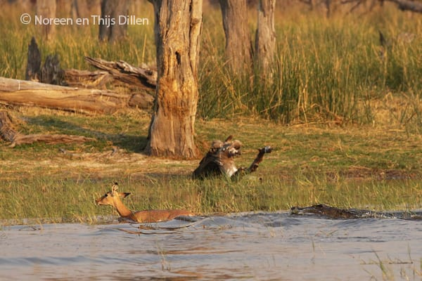 Evaluatie speciale kampeersafari Botswana + verlenging Mana Pools