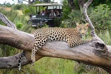 Botswana lodge safari