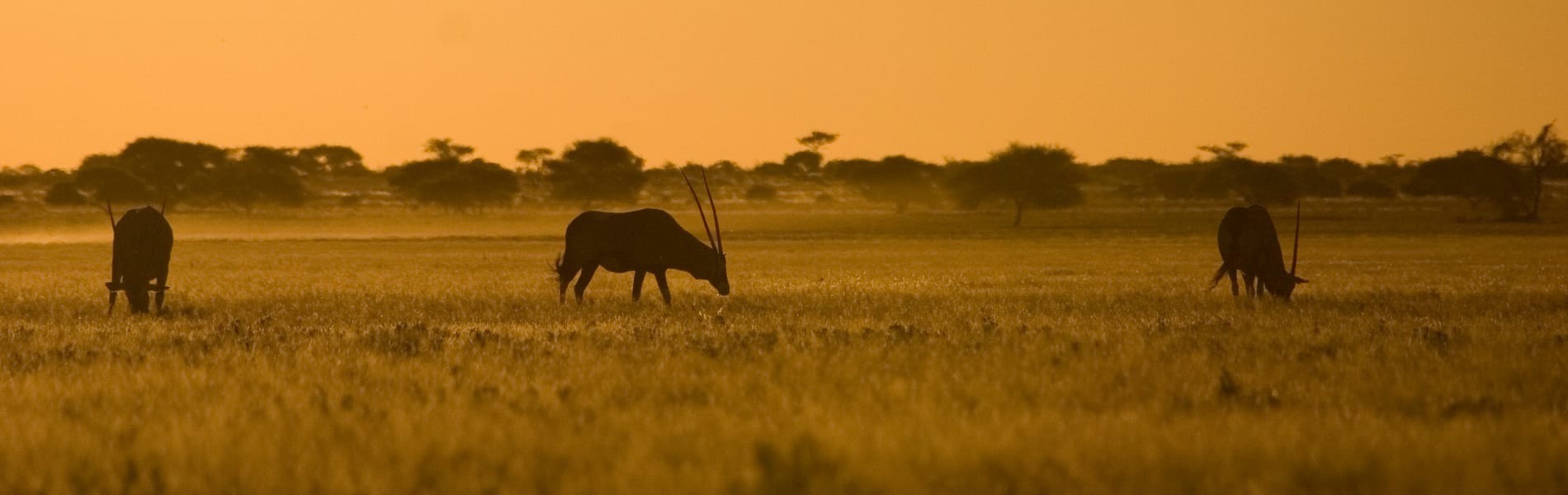 CKGR Oryx sunset