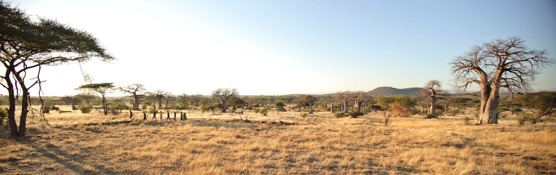 Kichaka Expeditions walk baobabs