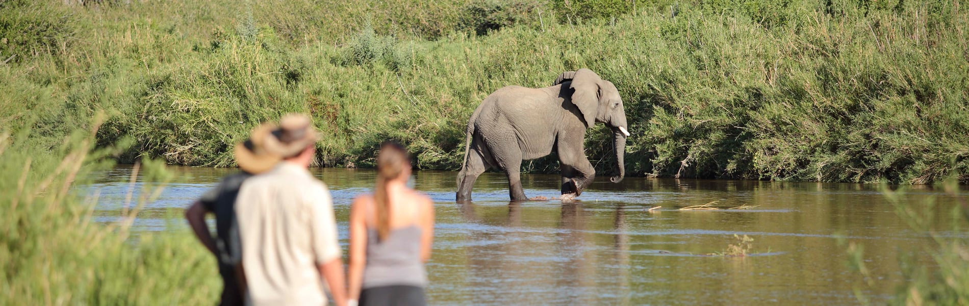 Kichaka Expeditions walk elephant