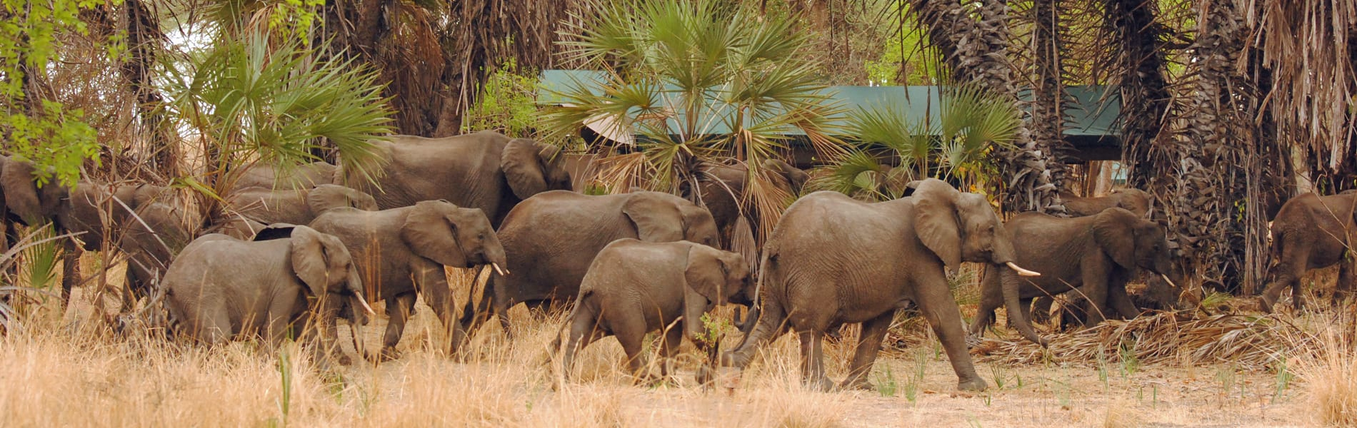 Lake Manze Tented Camp elephants