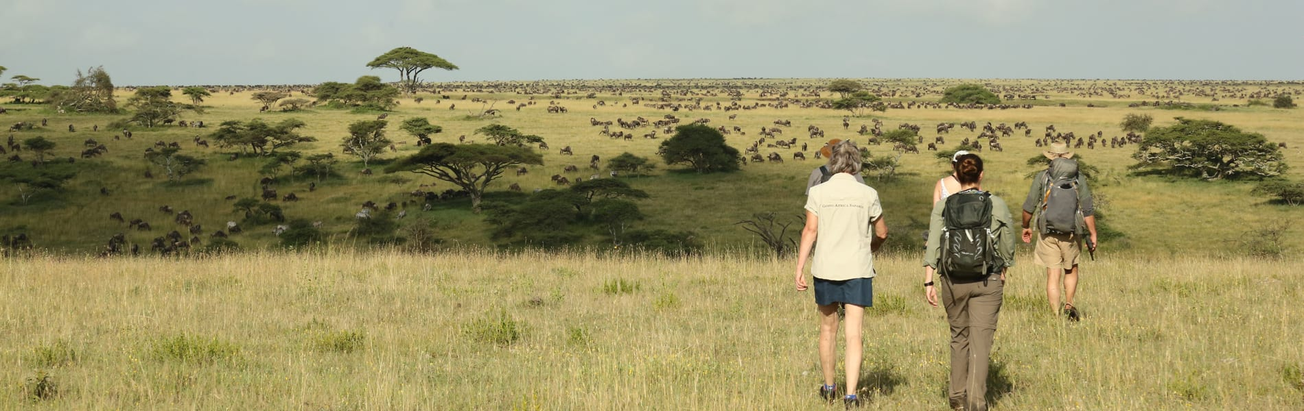 Walking Serengeti 1