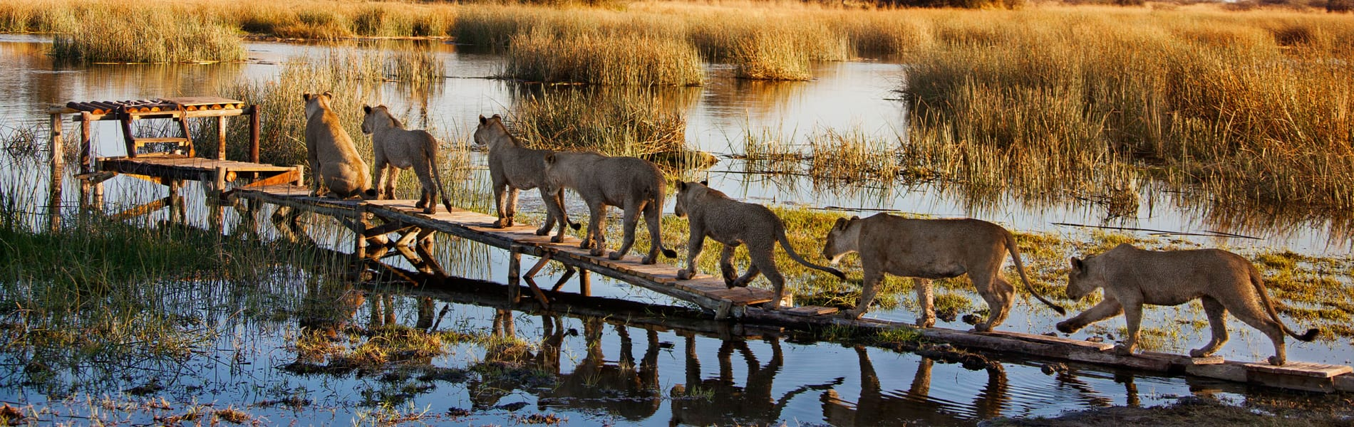 Okavango Delta accommodatie