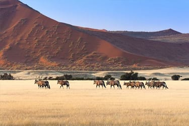 Guided lodge safari Namibie